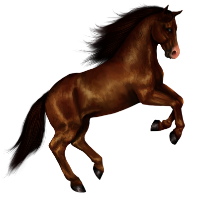 Horse Picture Download PNG Images