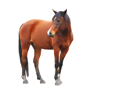Horse Picture Brown Animal PNG Images