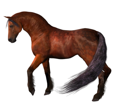 Horse Photos PNG Images