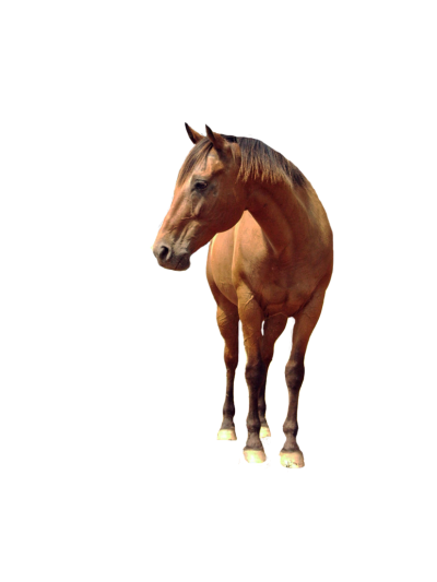 Horse Photo Image PNG Images