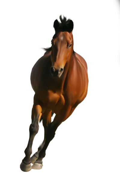 Horse Brown Picture Image Png
