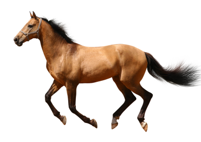 Running Horse Clipart Transparent PNG Images