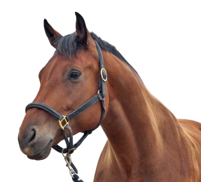 Horse High Quality PNG PNG Images