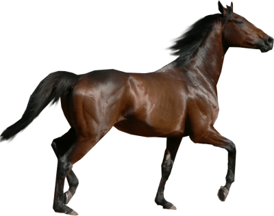 Running Horse Transparent Picture PNG Images