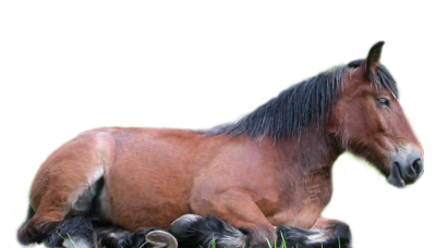 Sitting Horse PNG Images