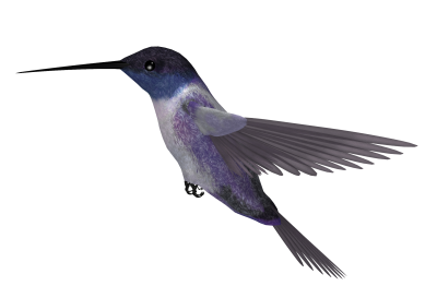 Hummingbird Tattoos Clipart Photo PNG Images