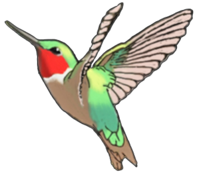 Hummingbird Tattoos Cut Out PNG Images