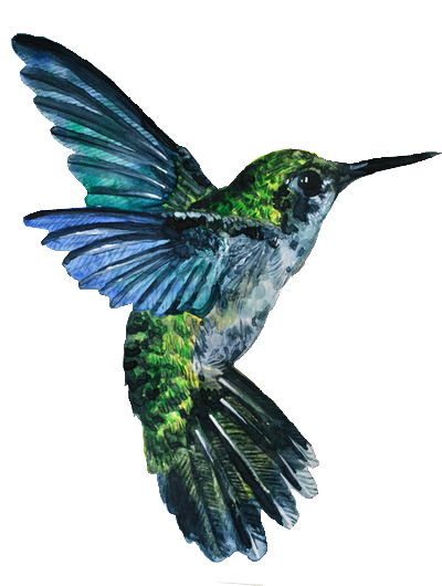 Hummingbird Tattoos Vector PNG Images