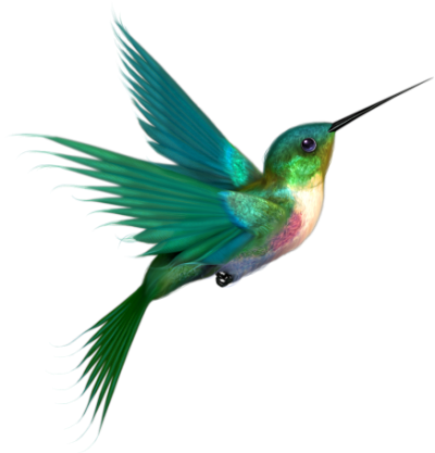 Picture Hummingbird Tattoos PNG Images