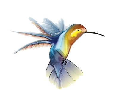 Vector Hummingbird Tattoos PNG Images