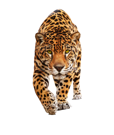 Jaguar Transparent Picture PNG Images