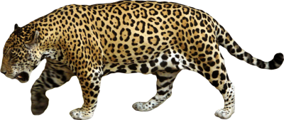 Jaguar High Quality PNG PNG Images