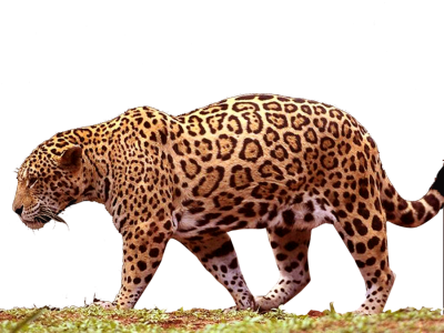 Jaguar Free Download Transparent
