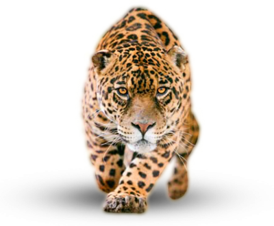 Jaguar Photos PNG Images