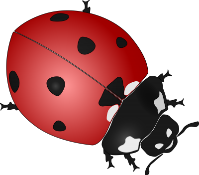 Ladybug Transparent Background PNG Images