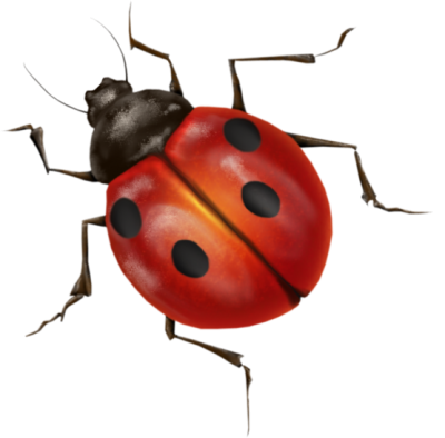 Ladybug Icon Clipart PNG Images