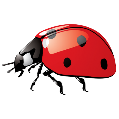 Ladybug Wonderful Picture Images 3 PNG Images