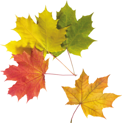 Leaf Frame High Quality PNG