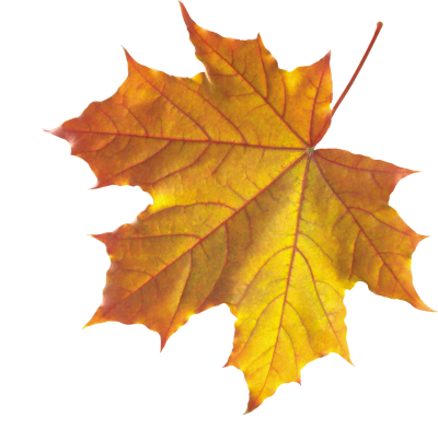 Leaves Background PNG Images