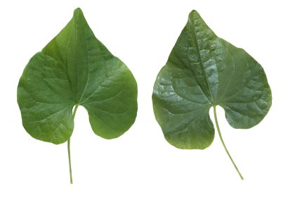Leaves HD Photo Png PNG Images