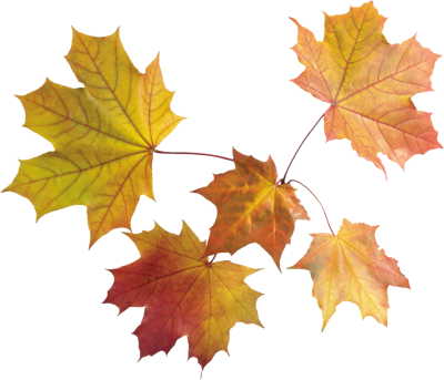 Leaves Best Png PNG Images