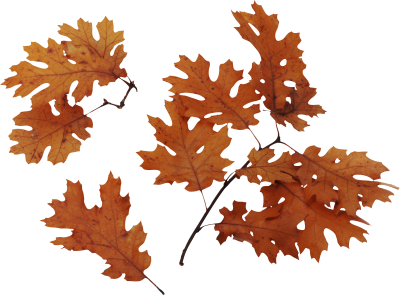 Leaves Icon Clipart PNG Images
