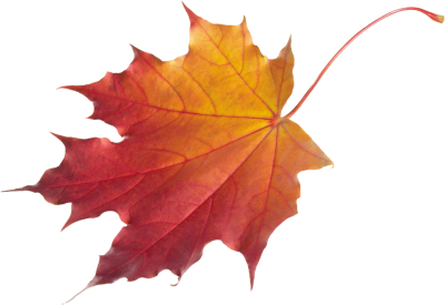 Leaves Clipart Transparent PNG Images