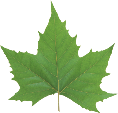 Leaves Cut Out PNG Images