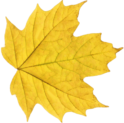Leaves Transparent Background PNG Images