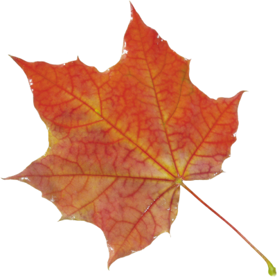 Leaves Picture PNG Images