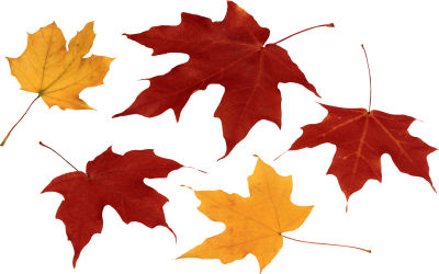 Leaves Simple PNG Images