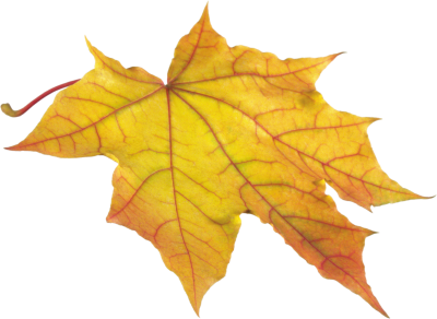 Leaves Free Download Transparent PNG Images