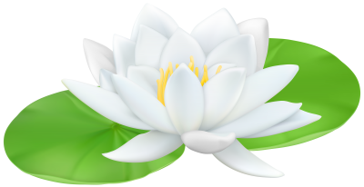 Lily Clipart PNG Photos PNG Images