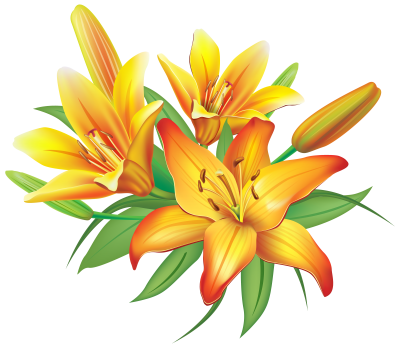 Lily PNG Icon PNG Images