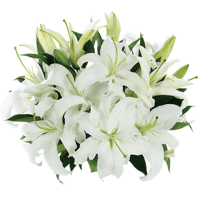 Flower Lily Wonderful Picture Images