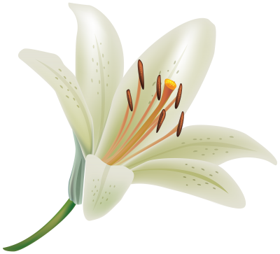 Lilies Flower Free Cut Out PNG Images