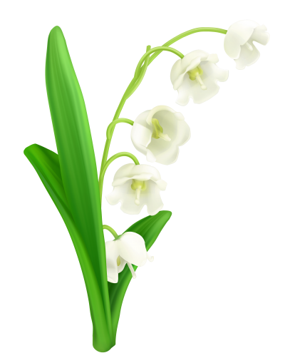 Valley Flower Lily Clipart Photo PNG Images