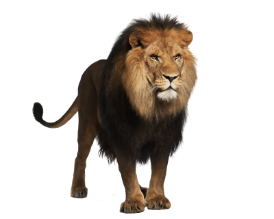 Lion Amazing Image Download PNG Images