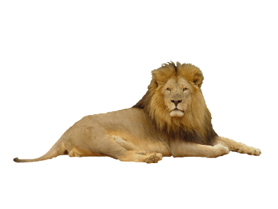 Lion Picture PNG Images