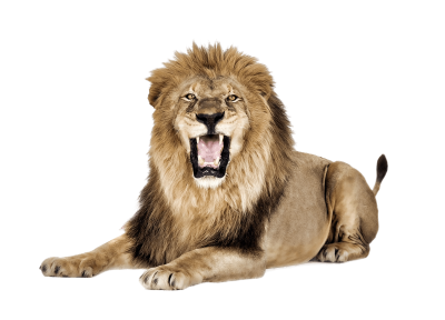 Download Lion PNG PNG Images