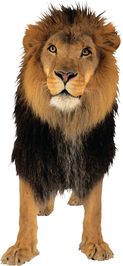 Lion Png PNG Images