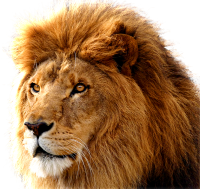Head Lion Free Cut Out PNG Images