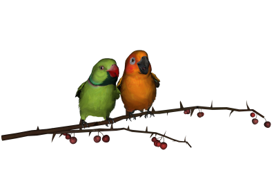 Love Birds Clipart Photos 4 PNG Images