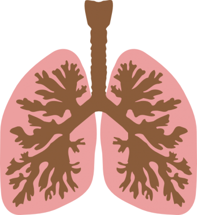Domain Lungs Clipart Pic PNG Images