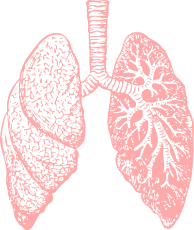 Light Lungs Png Transparent Image