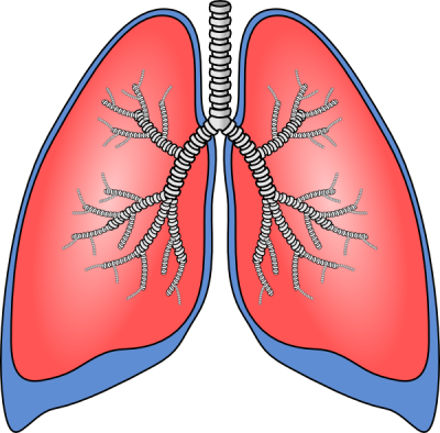 Lungs Clip Art At Photo