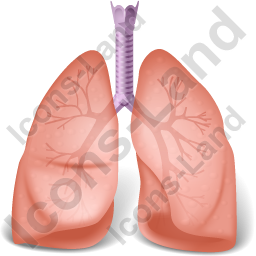 Lungs Icon, Png