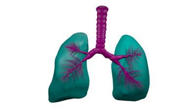 Lungs Png Pictures