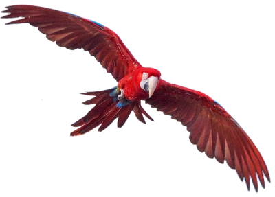 Flying Macaw Hd Photo PNG Images