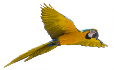 Macaw Clipart Transparent PNG Images